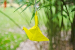 Origami crane near the minka
